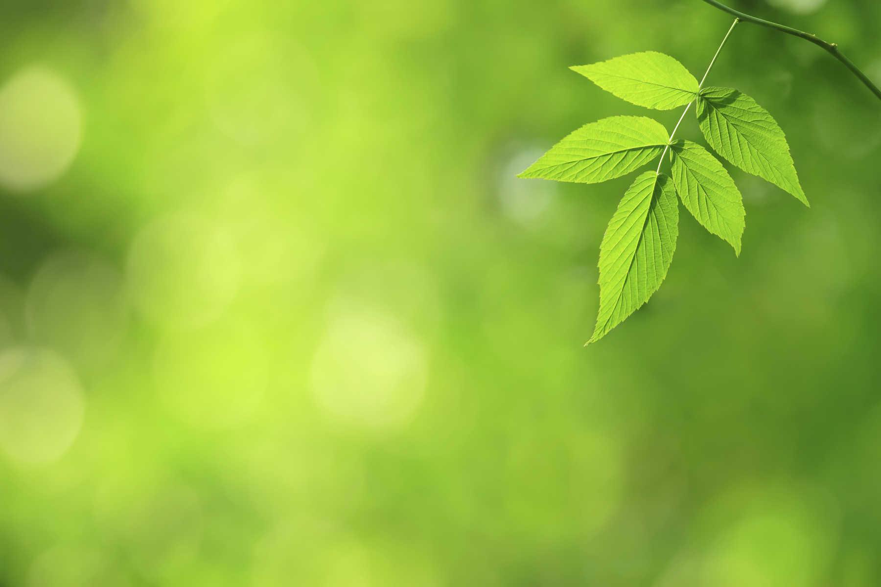 eco-background